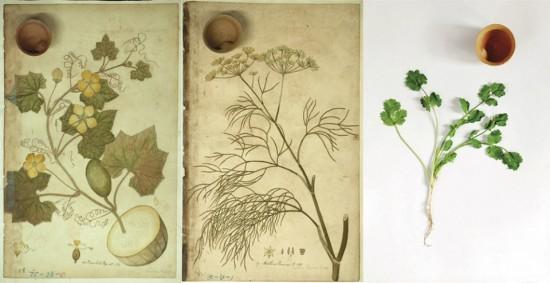J.-Flora-Indica-Clay-Cups.L